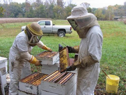Lanny & Josh Working the Hives